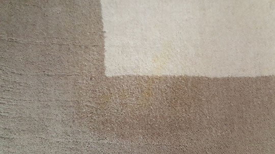 Removal of pet urine stain from wool rug