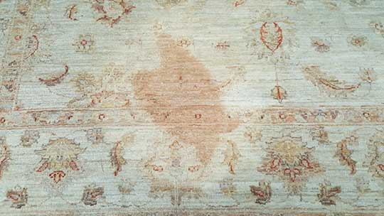 Rug Stain and Odour treatments